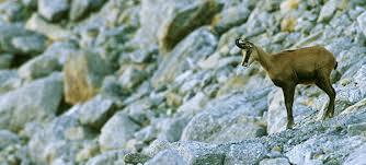 Ensija range during a trek through the Pyrenees | Bergueda