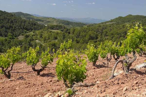 Trekking the Priorat region | priorat history