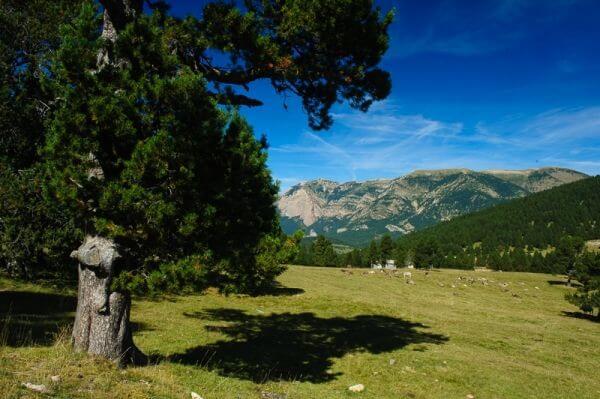 Berguedà   Walking holidays in Spain