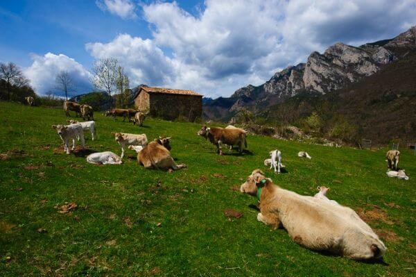 Berguedà | Cadi Moixero