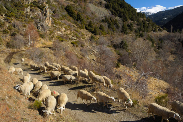 walking in the Pyrenees