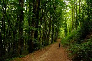 El camino de la libertad   Viajes en Francia