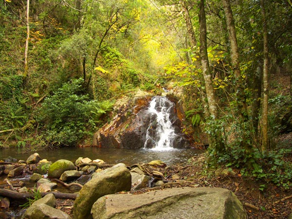 Stream in the Montseny natural park
