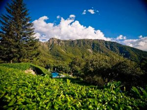 Sant Marcal. Montseny natural park